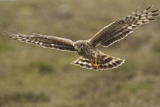 Birds Of Prey Worcestershire Wildlife Trust
