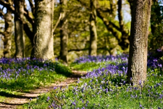 Path through the bluebells at The Knapp and Papermill by Paul Lane