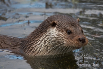 Otter by Elliot Smith