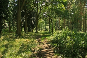 Chaddesley Woods by Wendy Carter