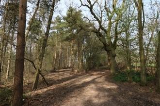 Newbourne Wood by Wendy Carter