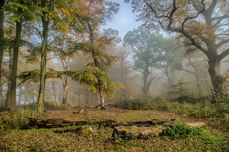Trees at Piper's Hill and Dodderhill Common nature reserve by Robin Couchman
