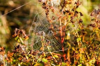 Cobweb in autumn by Paul Lane