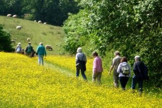 People walking through a field of buttercups