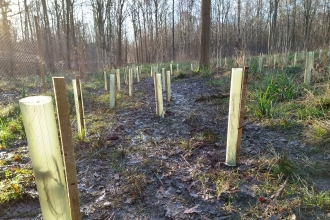 Tree planting at Trench Wood by Ben Rees