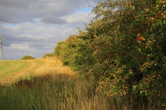 Hedgerow and field margin by Wendy Carter