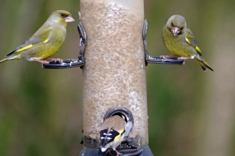 Birds on a feeder by Gillian Day