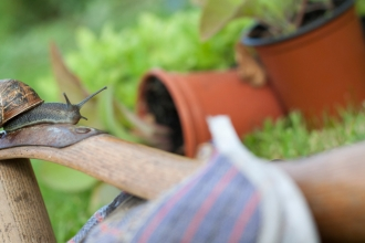 Snail on the handle of a garden tool with gardening gloves in foreground by Tom Marshall