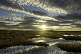 Pools on peat bog by Mark Hamblin/2020VISION