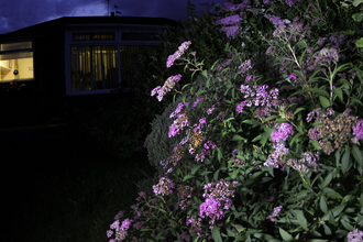Flowers in a garden at night-time by Jack Perks