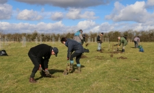 Tiddesley Wood volunteers planting plum trees