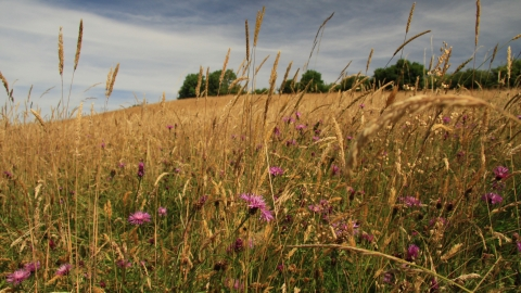 Hollybed Farm Meadows by Wendy Carter