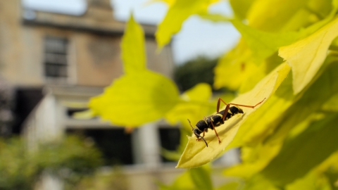 Wasp beetle on leaf with house in background by Nick Upton/2020VISION