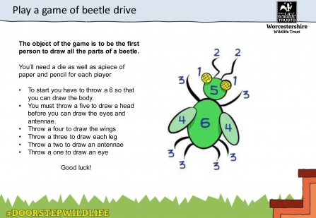 Instructions for playing beetle drive