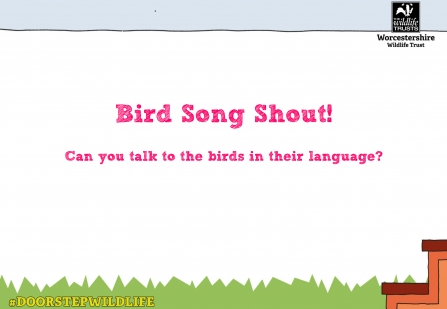 "Picture showing the title ""Bird Song Shout"""