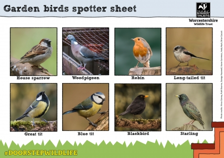 Spotter sheets of common birds
