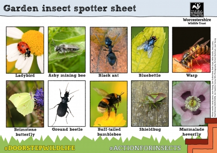 10 different insects to spot