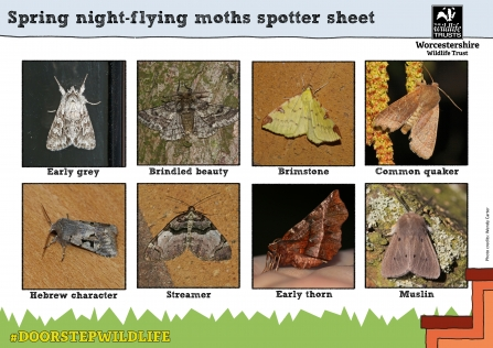 8 common Worcestershire moths to spot