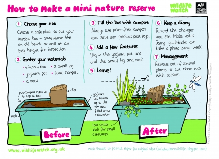 Instructions for creating a mini nature reserve