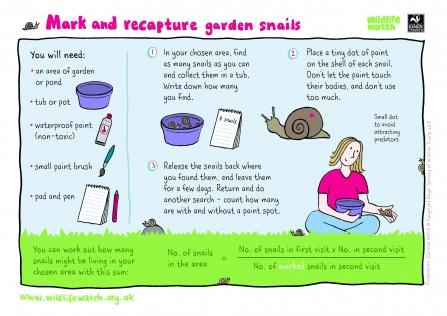 Instruction for marking and recapturing snails