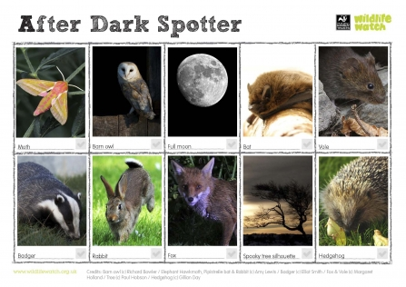 10 different wild things to spot at night