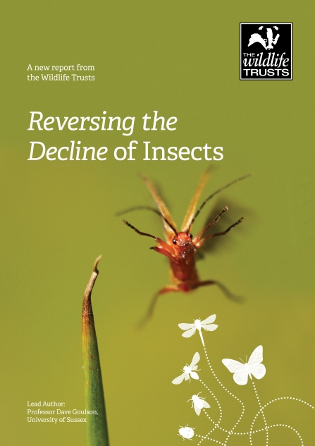 Front cover of the report Reversing the Decline of Insects